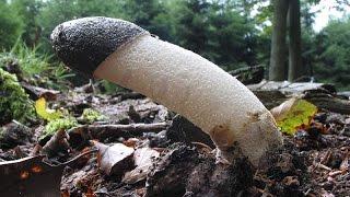 getlinkyoutube.com-10 Plantas y hongos que parecen partes del cuerpo
