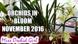 getlinkyoutube.com-Orchids in bloom - November 2016