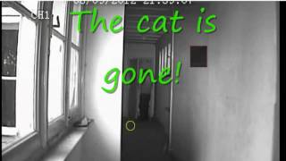 """Old ministers home """"The Cat"""""""