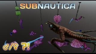 getlinkyoutube.com-Sea Emperor gender confusion!   Subnautica News #56