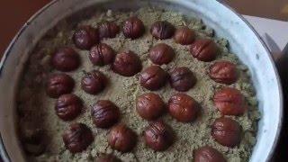getlinkyoutube.com-Выращивание грецкого ореха из семян