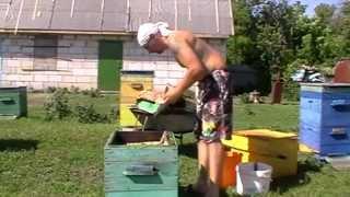 getlinkyoutube.com-Пчеловодство. Расширение гнезда.