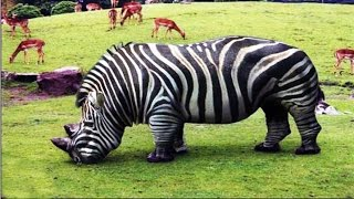20-Bizarre-Hybrid-Animal-That-Actually-Exist width=