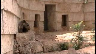 getlinkyoutube.com-גן החיות התנכי בירושלים  Jerusalem Biblical Zoo