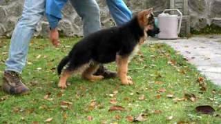darko cucciolo