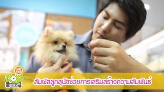 getlinkyoutube.com-คู่มือการเลี้ยงลูกสุนัขฉบับสมบูรณ์ by Dogilike.com Ep.6