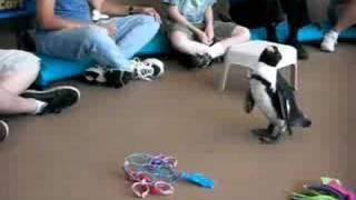 getlinkyoutube.com-Mystic Penguin Encounter