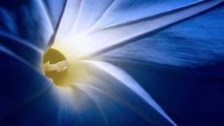 Dintre toate florile albastre - Agape