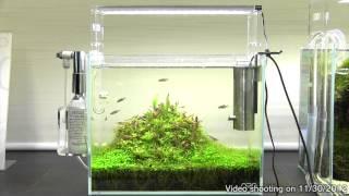 getlinkyoutube.com-[ADA view 368] Follow-up video of NA Gallery aquariums.