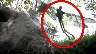 getlinkyoutube.com-5 Mysterious Creatures Caught on Camera