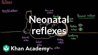 getlinkyoutube.com-Neonatal reflexes | Behavior | MCAT | Khan Academy