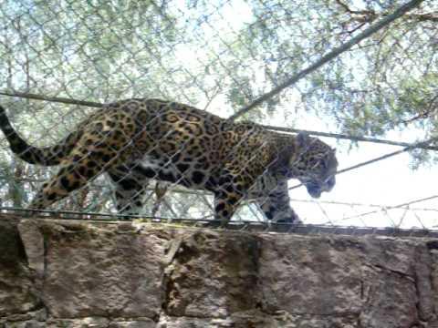 Zoologico de Mexquitic