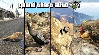 getlinkyoutube.com-GTA 5 - Play as a Bird (Chicken, Seagull, Hawk, Crow & more) [PS4 & Xbox One]