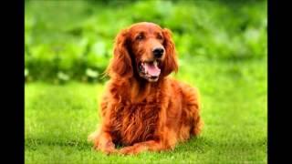 getlinkyoutube.com-ТОП 10 самых добрых собак в мире