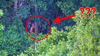 Fotografer ini tak sengaja menangkap pemandangan mengejutkan di pedalaman hutan