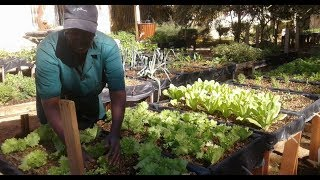Le cri du cœur des Jardiniers , Un reportage dans la ville de Dakar