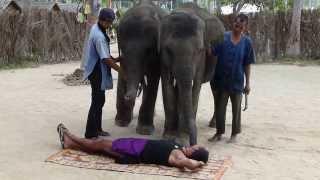 מופע פילים וקופים בקוסומוי תאילנד - Show elephants and monkeys in ko samui Thailand i