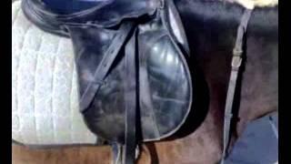getlinkyoutube.com-ركوب الخيل   طريقة الصعود والنزول من على ظهر الحصان