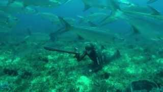 getlinkyoutube.com-Pesca submarina extrema del tarpón o sábalo con Joseba Kerejeta en Isla Margarita, Venezuela