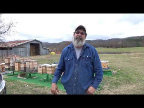 Beekeeping tip part 2