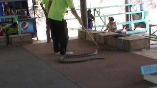getlinkyoutube.com-หมองู ตายเพราะงู