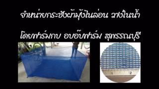 getlinkyoutube.com-จำหน่ายกระชังบก กระชังบนดิน กระชังมุ้งไนล่อน ราคาถูก