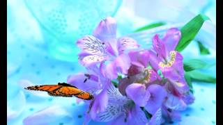 getlinkyoutube.com-футаж-бабочка на цветах