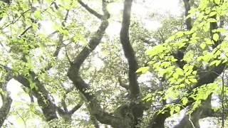 getlinkyoutube.com-한국의 숲_신성한 숲길 사려니숲