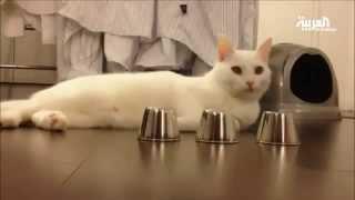 قط ليس كباقي القطط مذهل