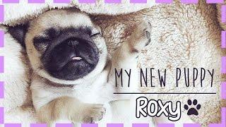getlinkyoutube.com-MEET MY NEW PUPPY!
