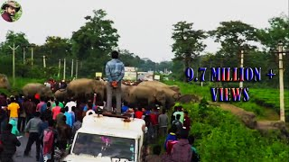 getlinkyoutube.com-Real Disturbances For The Elephant Herd Crossing Naksalbari Road.