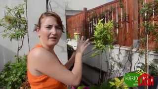 getlinkyoutube.com-El huerto en casa 60 frutales