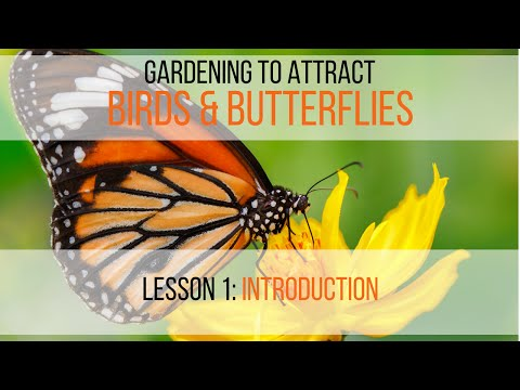 Gardening to Attract Birds & Butterflies Lesson 1: Introduction
