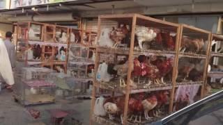 getlinkyoutube.com-Jeddah Meyn Janwaro ki Market Pigeon shops Pakistani pigeons