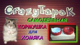 getlinkyoutube.com-Как сделать кормушку для хомяка своими руками (# CrazyTapaK)