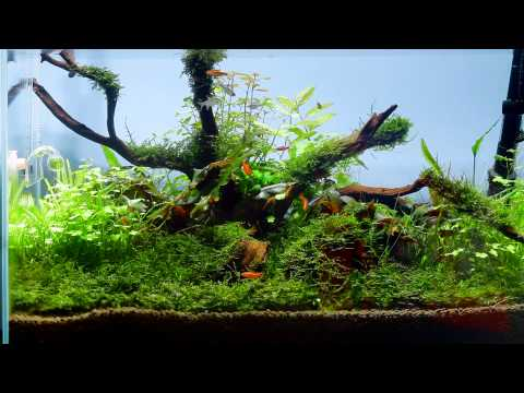 60cm Nature Aquarium