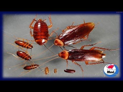 Descargar musica de la hormiga 2 quita el polvo gratis for Como eliminar los acaros de la casa
