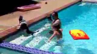 getlinkyoutube.com-Lulu Goes Swimming