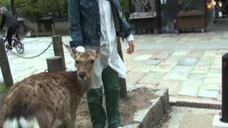 getlinkyoutube.com-2012吉田羊IN京都③