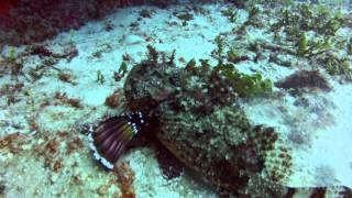 getlinkyoutube.com-Dive Negril Jamaica