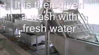 getlinkyoutube.com-Ginger Washing Cleaning & Drying Plant by BAJAJ PROCESSPACK LIMITED