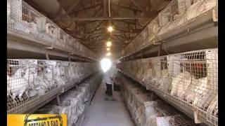 getlinkyoutube.com-Биробиджанская птицефабрика (СТС-Биробиджан)