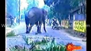 getlinkyoutube.com-Elephant Attacking Video