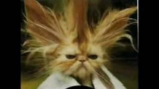 getlinkyoutube.com-Fotos engraçadas de animais