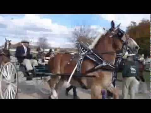 Michigan Great Lakes International Draft Horse Show   .Part 1