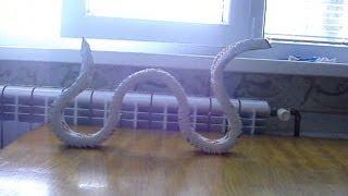 getlinkyoutube.com-3D Origami Snake Tutorial