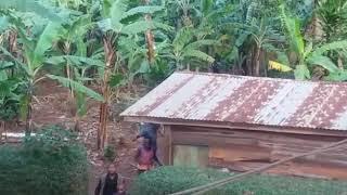 Tembo walivyo vamia mkoani Kilimanjaro