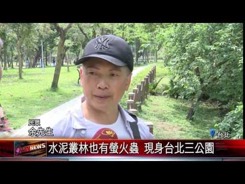 螢火蟲季到了 台北都會區公園現蹤