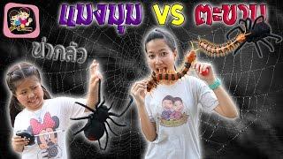 getlinkyoutube.com-แมงมุมVSตะขาบ พี่ฟิล์ม น้องฟิวส์ Happy Channel