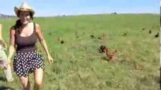 "getlinkyoutube.com-Joel Salatin ""the lunatic farmer' visit at Polyface Farm 2013"